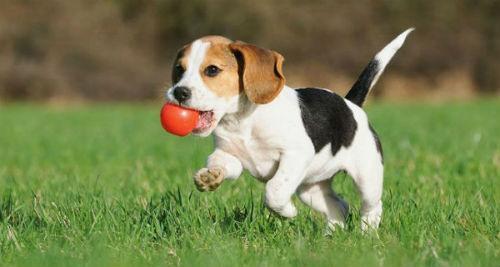 alimento para cachorros