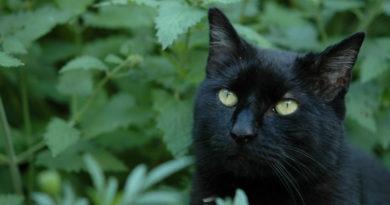 Catnip: Qué es y sus efectos en los gatos