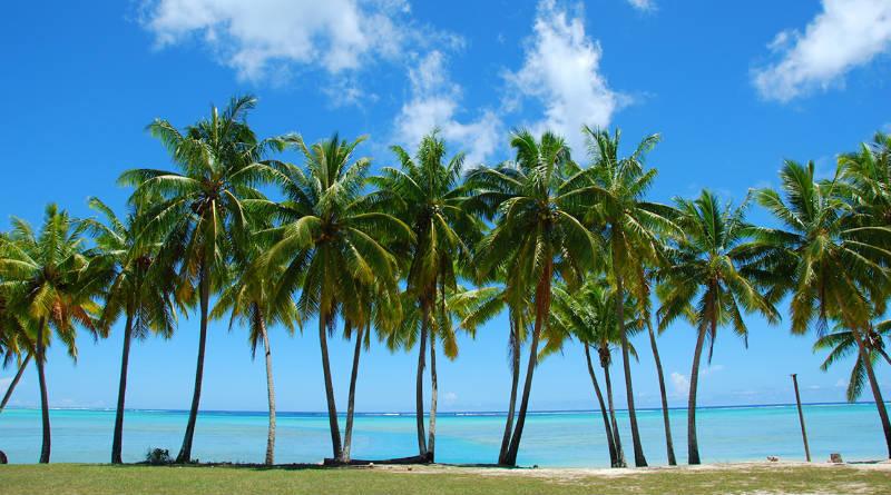 podar palmeras