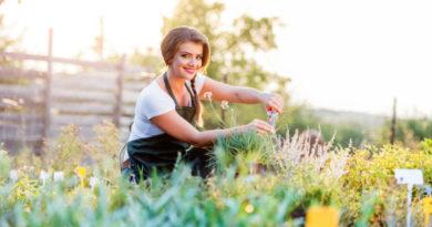 11 plantas medicinales que puedes cultivar en casa
