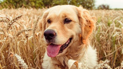Actividades al aire libre con mascotas