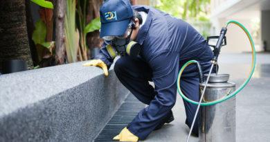 Control de plagas en casa
