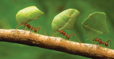 El fascinante mundo de las hormigas
