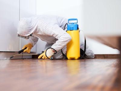 Es importante realizar un control de plagas en casa
