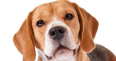 Las mejores razas de perros pequeños para niños