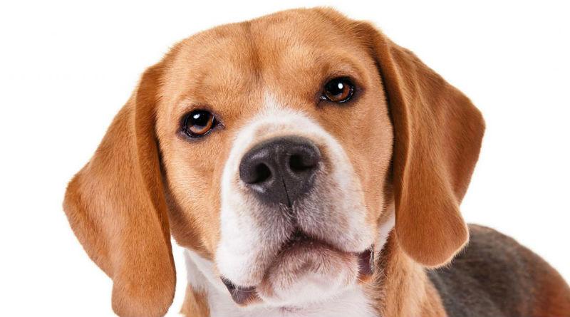 Las mejores razas de perros pequenos para ninos
