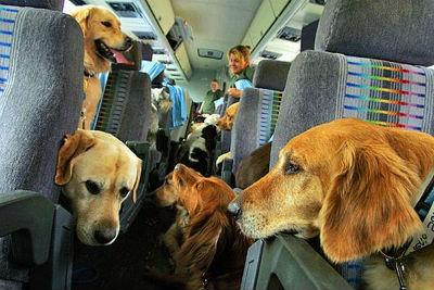 Perros en el avion