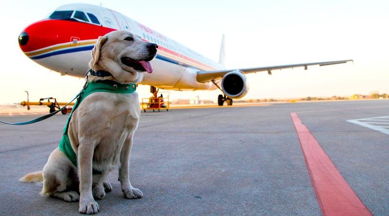 Viajar con perro en avion