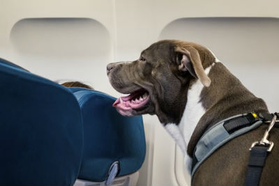 Viajar con tu perro en avion