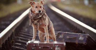 Viajar por la naturaleza con tu mascota