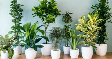Consejos para el cultivo de plantas de interior
