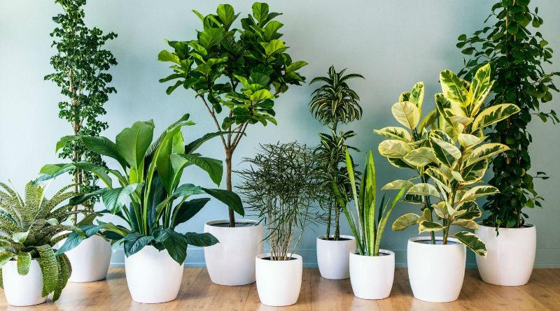 Consejos para el cultivo y cuidado de plantas de interior for Cuales son las plantas para interiores