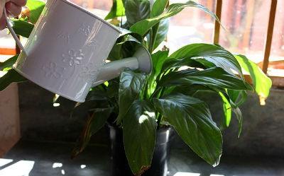 Cultivo de plantas de interior