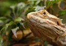 Los terrarios, el mejor hábitat para tu reptil