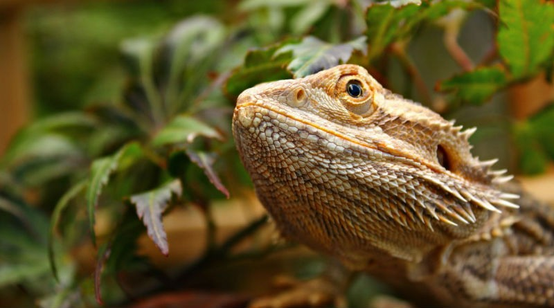 Terrarios mejor habitat para tu reptil