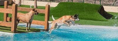 mejores hoteles para perros