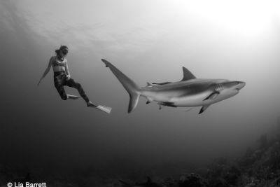 El tiburon y el hombre en la naturaleza