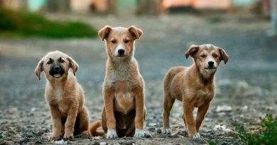 Aprende y educa en cuidados hacia los animales