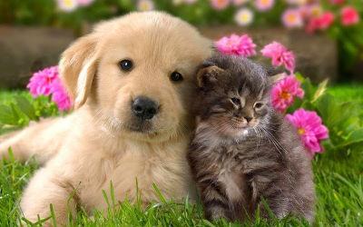 Buen veterinario