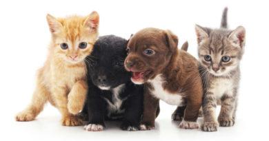 Consejos para elegir un buen veterinario