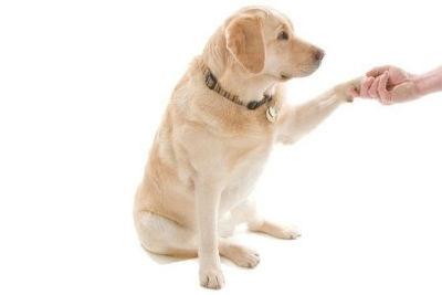 Cuidados animales