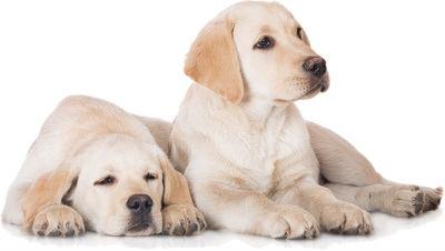 Preocuparnos los cuidados de las mascotas