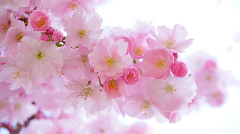 Regala flores regala amor