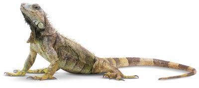 Que son los reptiles