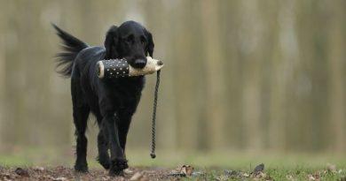 Mejor metodo para el entrenamiento de perros