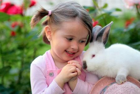 mascotas conejos