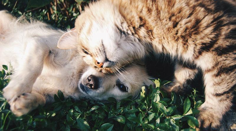 mascotas reino animal