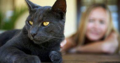 Formar un lazo de union con tu gato