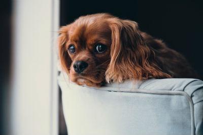 Trucos limpieza hogar mascotas