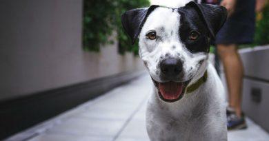 mejor sitio con la informacion y consejos sobre perros