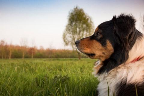 sitio de perros Toppercan
