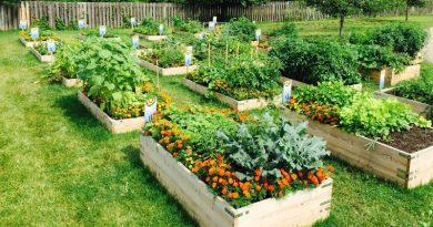 Jardin en casa