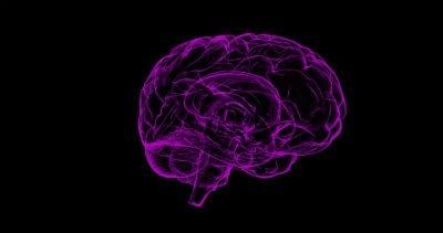 Como funciona el sistema nervioso humano