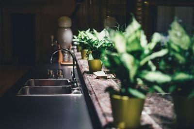 Mejores plantas de interior para decorar