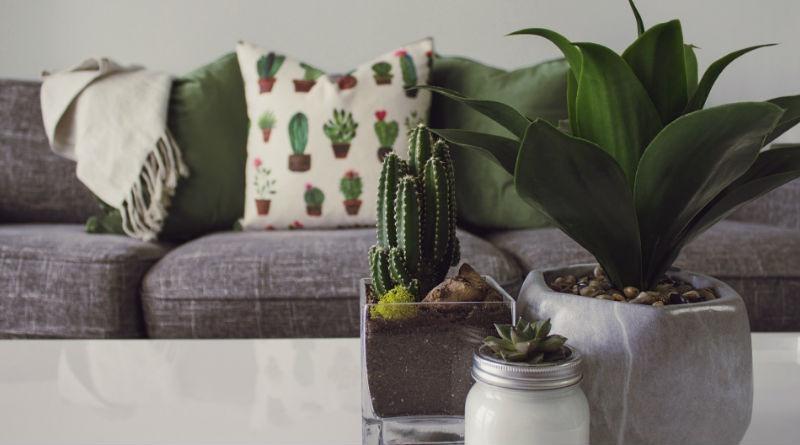 Mejores plantas de interior para decorar y consejos para su cuidado - Mejores plantas para interior ...