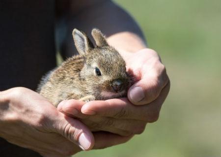mejor jaula para tu conejo