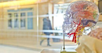 neuropsicologia disciplina avances impostantes