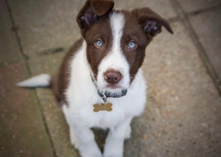 chapa personalizada para mascotas
