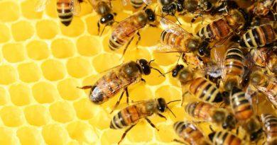 prevenir riesgos apicultura