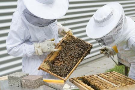 trabajar apicultura
