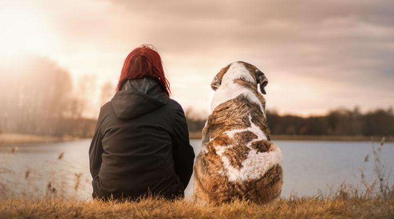 Las mascotas forman parte de nuestras vidas