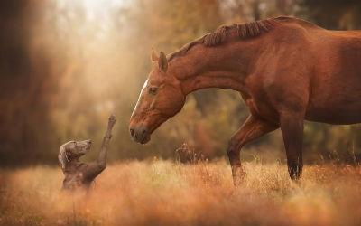 Que nombre se le pone a un caballo