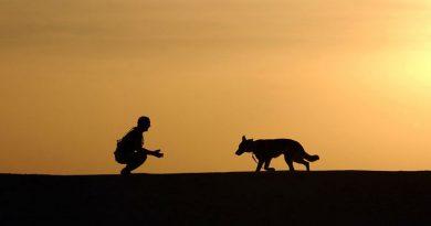 Consejos para sacar a pasear a perros senior