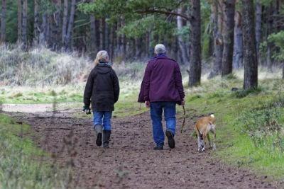 Sacar a pasear a un perro anciano