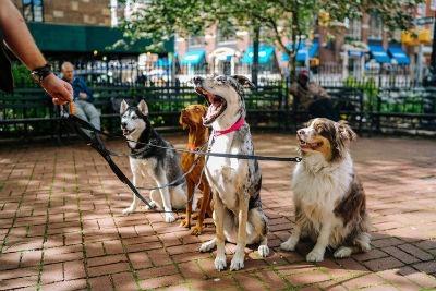 Tener perro y tu salud