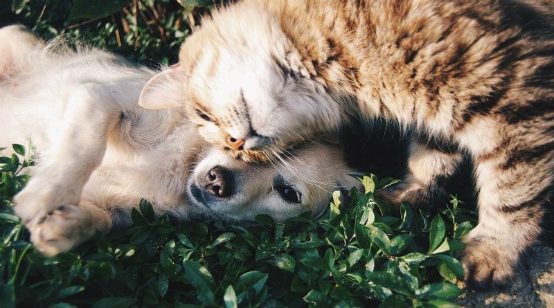 El cuidado de nuestros animales domésticos